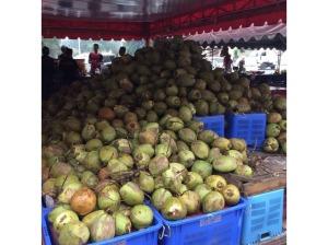 7495763-Coconuts_Batu_Berendam_Coconut_Shake_Melaka_Melaka
