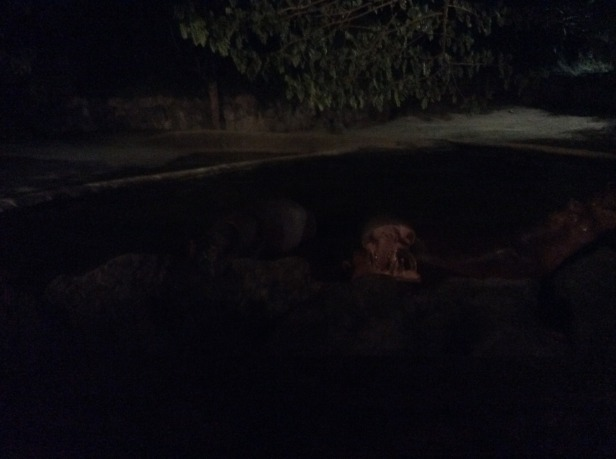 7508338-Hippo_honest_Chiang_Mai_Night_Safari_Chiang_Mai